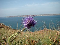 Une flore variée sur le site.