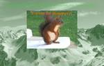 le petit écureuil de Pau