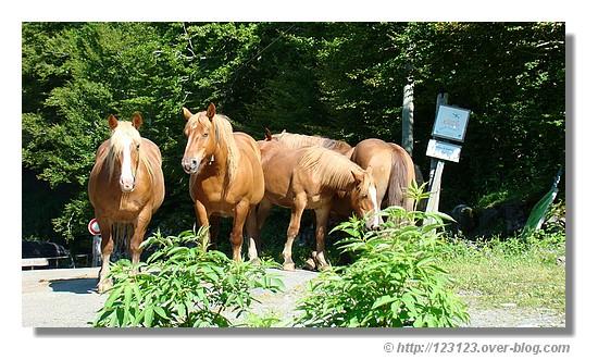 Rencontre avec ces chevaux lors d'une balade près de Lescun (Pyrénées Atlantiques en juin 2008) - © http://123123.over-blog.com