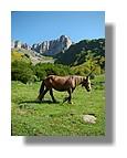 Un cheval près du refuge de Labérouat. Juin 2008 - Pyrénées Atlantiques.