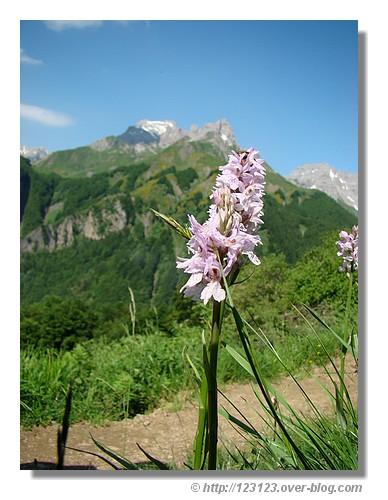 Au bord d'un sentier (Vallée d'Aspe - juin 2008) - © http://123123.over-blog.com