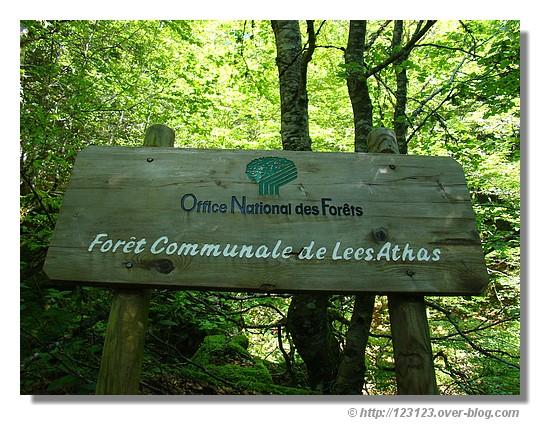 Passage dans la forêt communale de Lees-Athas (vallée d'Aspe) pour rejoindre le Pas d'Azun (été 2008) - © http://123123.over-blog.com