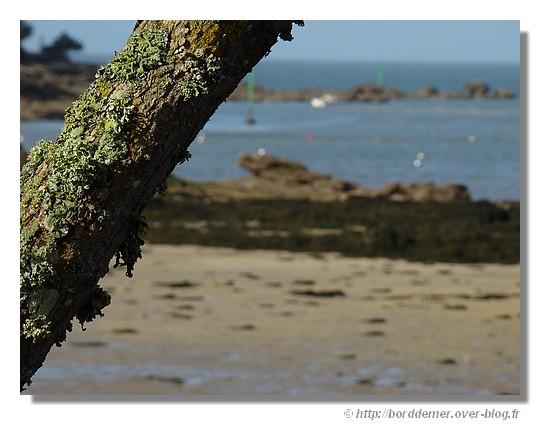 Près de Pouldohan à Trégunc, le dimanche 8 mars 2009. - © http://borddemer.over-blog.fr