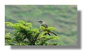 Un petit oiseau sur une branche. Juin 2008 - Pyrénées Atlantiques.