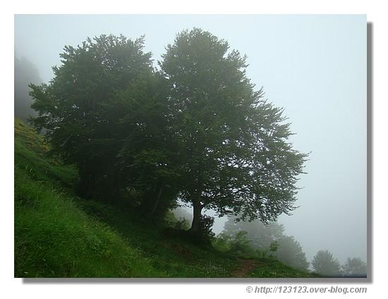 Retour de notre randonnée au Pas d'Azun dans les nuages (Vallée d'Aspe, juin 2008) - © http://123123.over-blog.com