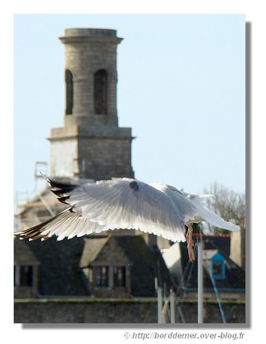 Envol d'un goéland avec en fond la Ville Close de Concarneau, le dimanche 15 mars 2009. - © http://borddemer.over-blog.fr