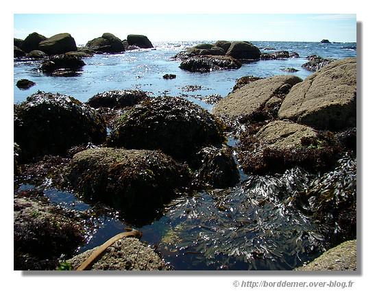 à marée basse - © http://borddemer.over-blog.fr