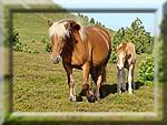 diaporama rencontres chevaux et vaches