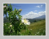 Le chemin de Bell Lloch dans les Pyrénées Orientales