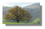 Un arbre dans le Pays Basque en mars 2008.