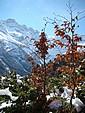 Retour de l'automne en hiver? (Mars 2008).