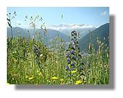 La vallée d'Aure vue de la route menant à la Hourquette d'Ancizan. Juin 2007 - Hautes Pyrénées.