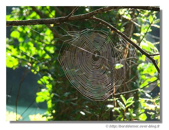 Une toile d'araignée (Anse Saint Laurent à la Forêt Fouesnant, le 08 septembre 2008) - © http://borddemer.over-blog.fr