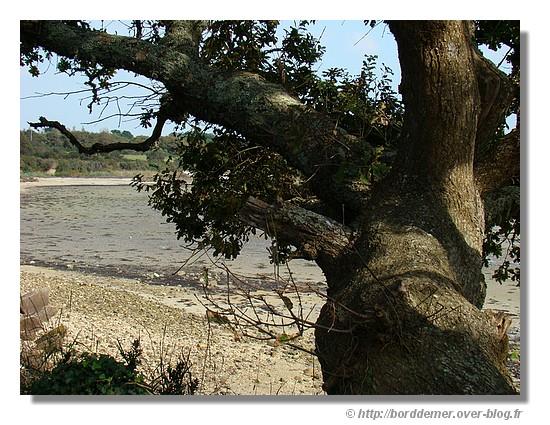 Un après midi d'automne à Ster Greich (Commune de Trégunc, le lundi 22 septembre 2008) - © http://borddemer.over-blog.fr