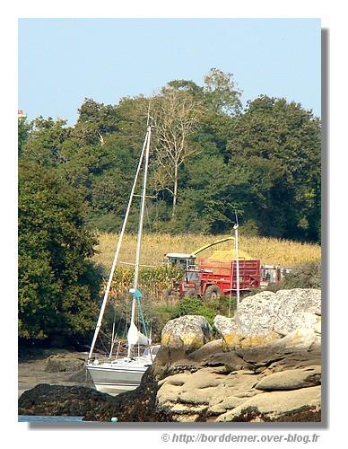 Bord de mer et campagne. Ensilage sur les bords du Minaouët à Concarneau (Octobre 2008) - © http://borddemer.over-blog.fr