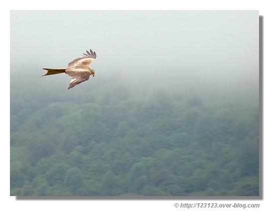 Dans les airs, à la recherche de proies (Vallée d'Aspe - juin 2008) - © http://123123.over-blog.com