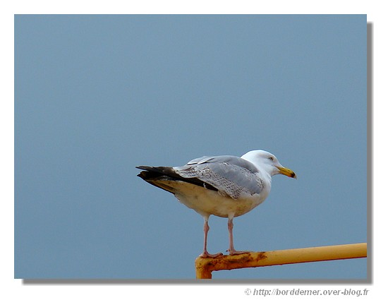 Observation (port de Concarneau) - © http://borddemer.over-blog.fr