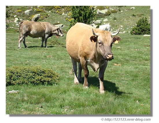 Nature près du Carlit dans les Pyrénées Orientales en juin 2007 - © http://123123.over-blog.com