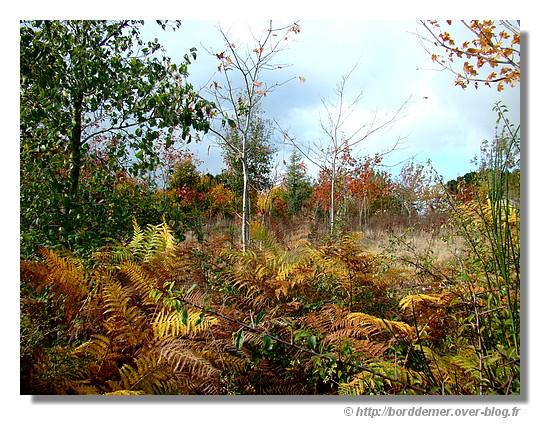 à la campagne (le lundi 27 octobre 2008) - © http://borddemer.over-blog.fr