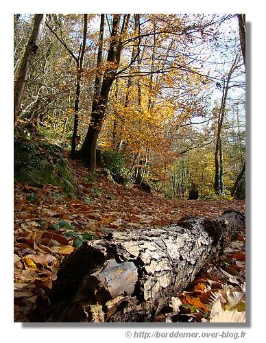 Balade dans le bois d'Amour à Pont Aven (11 novembre 2008) - © http://borddemer.over-blog.fr
