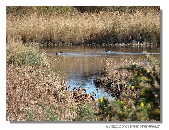 Un étang près de Pouldohan à Trégunc, le mardi 18 novembre 2008 - © http://borddemer.over-blog.fr