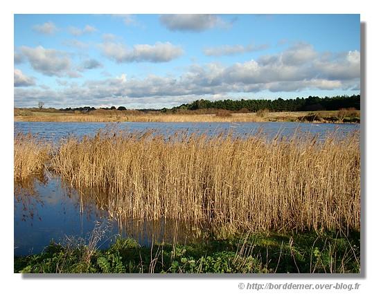 L'étang de Loc'h Lougar, à Trégunc, site naturel protégé. Le dimanche 14 décembre 2008 - © http://borddemer.over-blog.fr