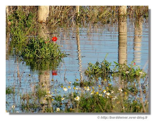 Un étang près de Trévignon à Trégunc, le dimanche 14 décembre 2008 - © http://borddemer.over-blog.fr