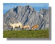 En famille. Lescun en vallée d'Aspe. Juin 2008 - Pyrénées Atlantiques.