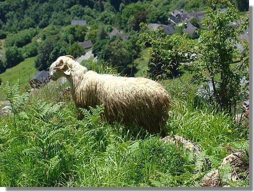 En pleine nature. (Sur les hauteurs du village de Lescun en vallée d'Aspe - juin 2008). - © http://123123.over-blog.com