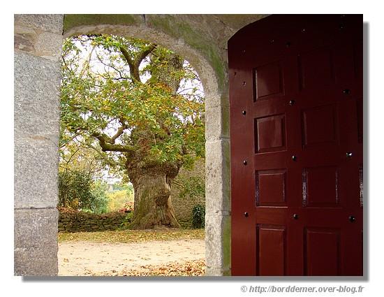 Un arbre bien âgé près de la chapelle de Trémalo à Pont Aven (novembre 2007) - © http://borddemer.over-blog.fr