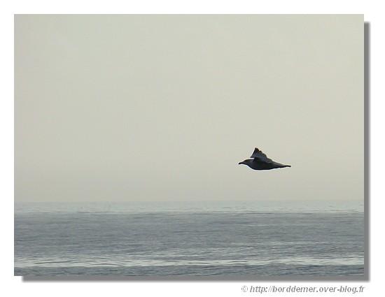 Vol au-dessus de l'océan - © http://borddemer.over-blog.fr