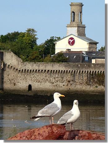 Deux goélands dans le port de Concarneau, face à la ville close et son célèbre clocher de l'ancienne église St Guénolé. Photo prise le 2 août 2009. - © http://borddemer.over-blog.fr