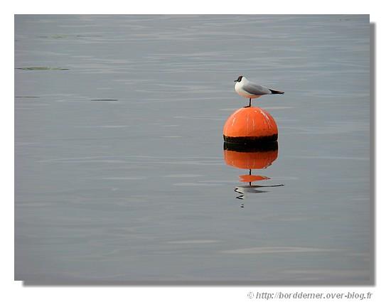 Au calme sur l'eau! (27 février 2009)- © http://borddemer.over-blog.fr
