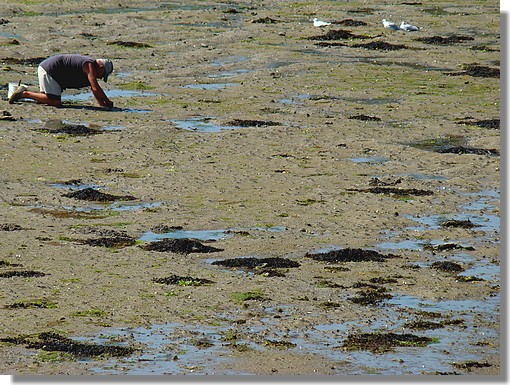 Un pêcheur à pied sur une plage, à marée basse, à Trégunc. Photo prise le 12 août 2009. - © http://borddemer.over-blog.fr