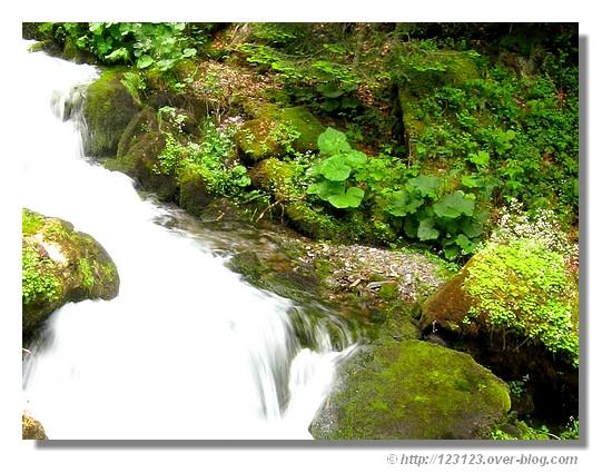 Un petit ruisseau au coeur de la nature béarnaise (juin 2008). - &cophttp://123123.over-blog.com