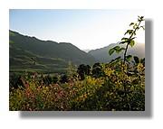 Au petit matin dans la campagne de Lescun en vallée d'Aspe. Juin 2008 - Pyrénées Atlantiques.