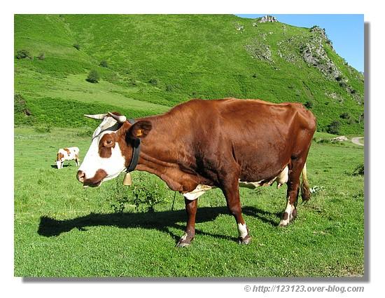 Vache photographiée sur le Plateau de Lhers, près de Lescun dans les Pyrénées Atlantiques (juin 2008) - © http://123123.over-blog.com