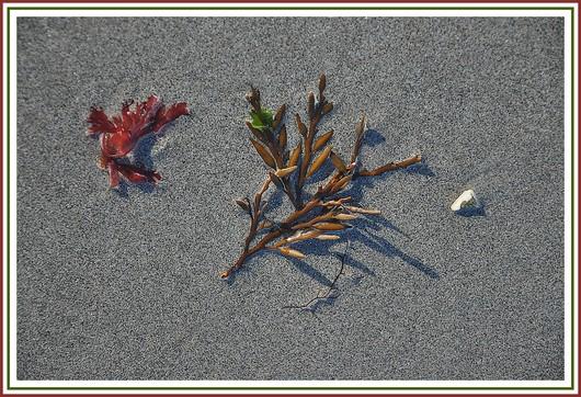 Un tableau naturel photographié sur une plage, près de Concarneau. Photo prise le 9 janvier 2011.
