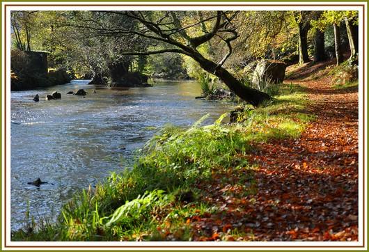 Endroit magique que ce bois d'Amour à Pont Aven. Balade sur les bords de l'Aven un matin d'automne. Photo prise le 10 novembre 2010.