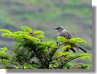 Un petit oiseau dans la vallée d'aspe (64) en juin 2008.