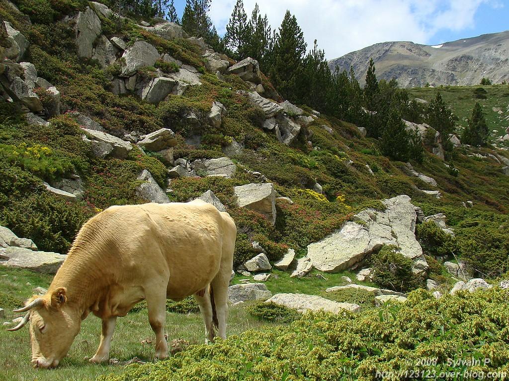 Nature des Pyrénées