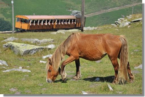 Le petit train à crémaillère de la Rhune avec au premier plan le célèbre pottock (cheval Basque qui vit en liberté sur les montagnes situées entre la France et l'Espagne). Photo prise le 27 juin 2012.