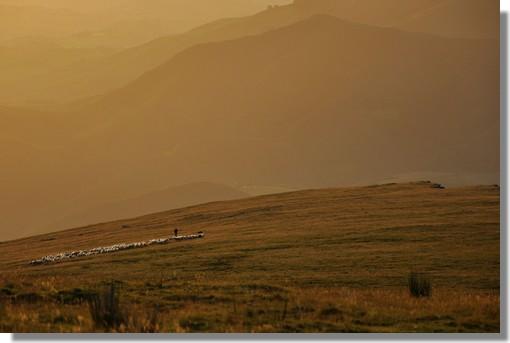 Un berger et son troupeau de brebis sur les pentes de l'Artzamendi au lever du jour. Photo prise le 27 juin 2012.