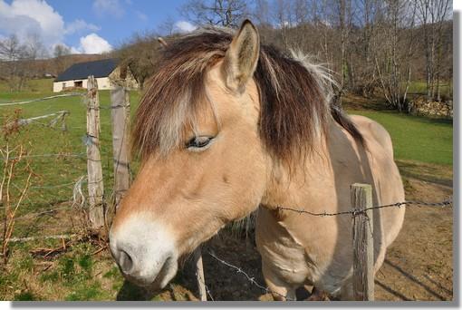 Arrêt près de ce cheval, venu nous saluer lors d'une balade, dans le village de Gaillagos (Val d'Azun). Photo prise le 22 mars 2011.