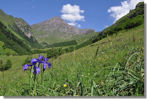 Le Pic d'Aulon avec au premier plan l'Iris des Pyrénées (protégé et il est interdit de le cueillir). Photo prise le 27 juin 2011 près des granges de Lurgues, dans les Hautes Pyrénées.