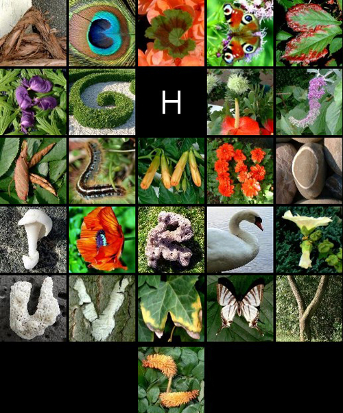 nature_alphabet