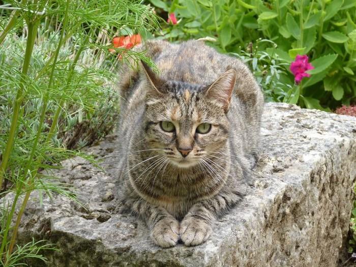 Chaminouche - chat ami de Furby et Fripon