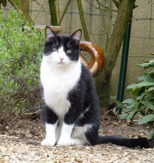 Fripon compagnon de Furby 237e chat noir