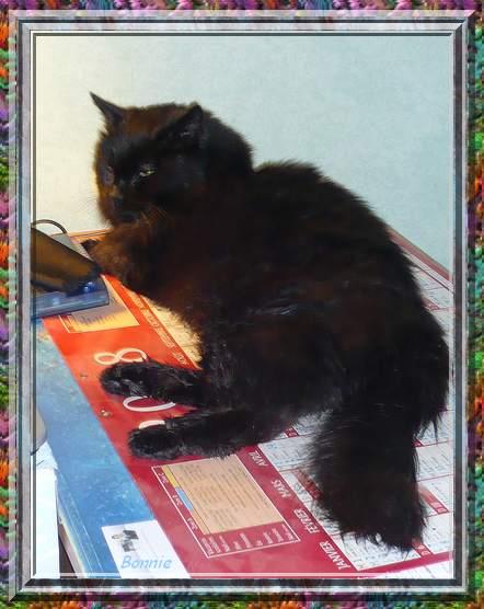 Bonnie 1er décembre 2008