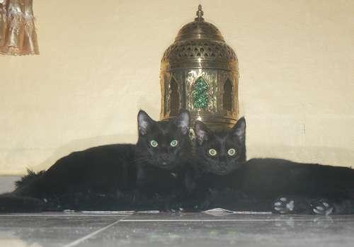 2 noirs